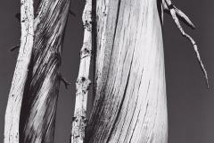 dead-20tree