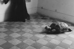 Francesca Woodman (1958-1981) - Untitled, Providence, Rhode Island, 1976-77 Dans son appartement dévasté, vide, avec ses murs écaillés, surgit une présence, un fantôme parfois, le fond d'elle-même toujours.