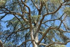 arbre à Rogé