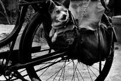 dog-bicycle-Photo_by_Christer_Strömholm
