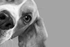 dog-face-side